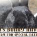smokeys bunny haven