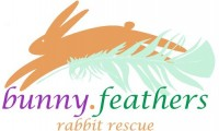 Bunny Feathers Rabbit Rescue