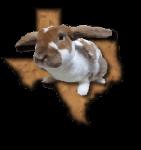 Bunny Buddies Rabbit Rescue