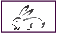 North Texas Rabbit Sanctuary